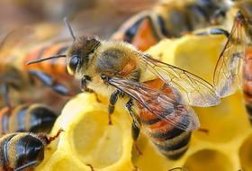 Гибель пчел как точка отсчета нового времени