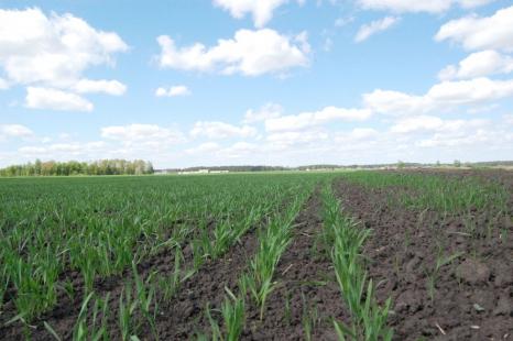 Технология подкормок  начинается с обработки семян